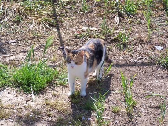 Cat at la Campagna