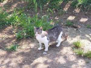 2nd cat of la campagna
